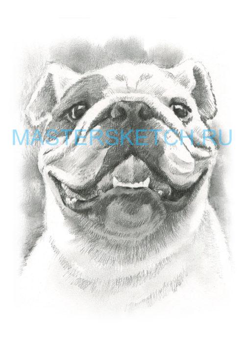 Портрет собаки по фото