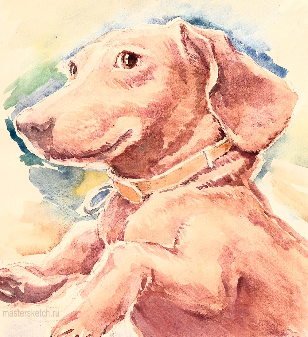 Портрет собаки, рисунок, заказать